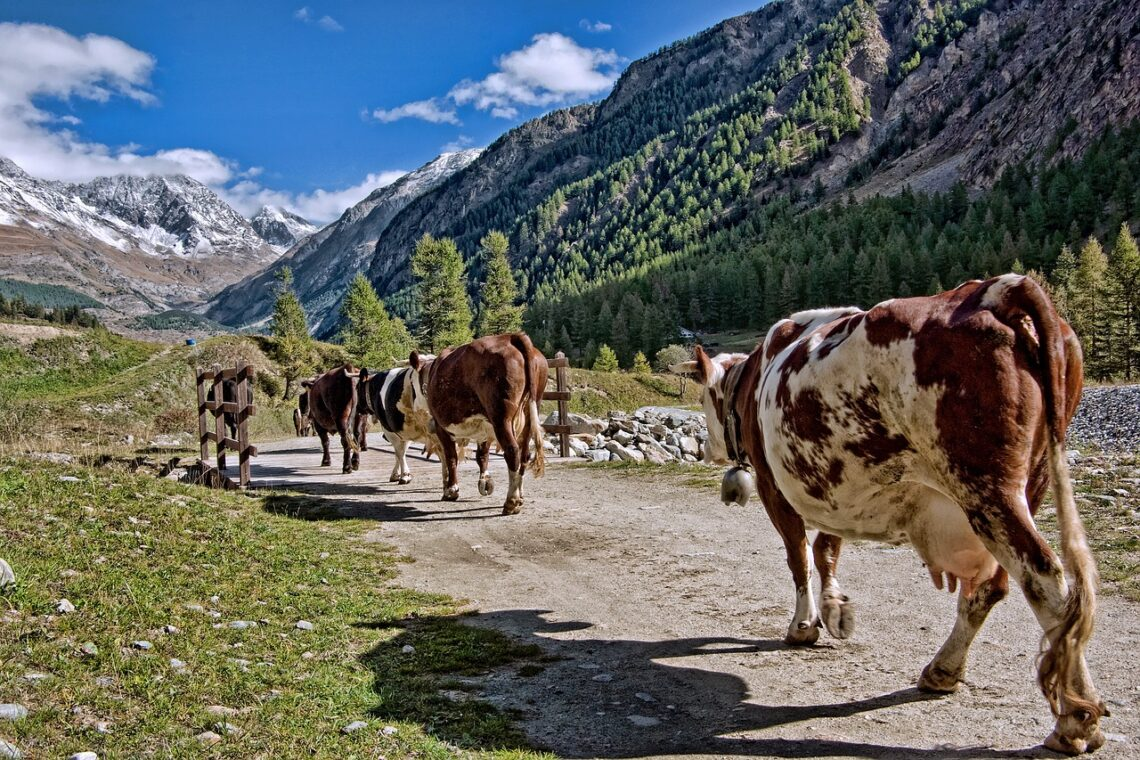 Programas de Sostenibilidad Turística en Destinos
